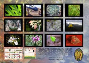 Planting Calendar back page - 2010