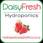 Daisy Fresh Hydroponics